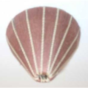 Baldachin textilumwickelt, Farbe 35 rosa